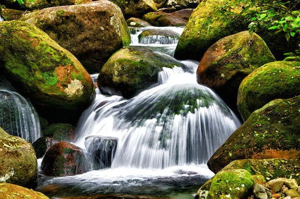 109684__forest-stream_600px w